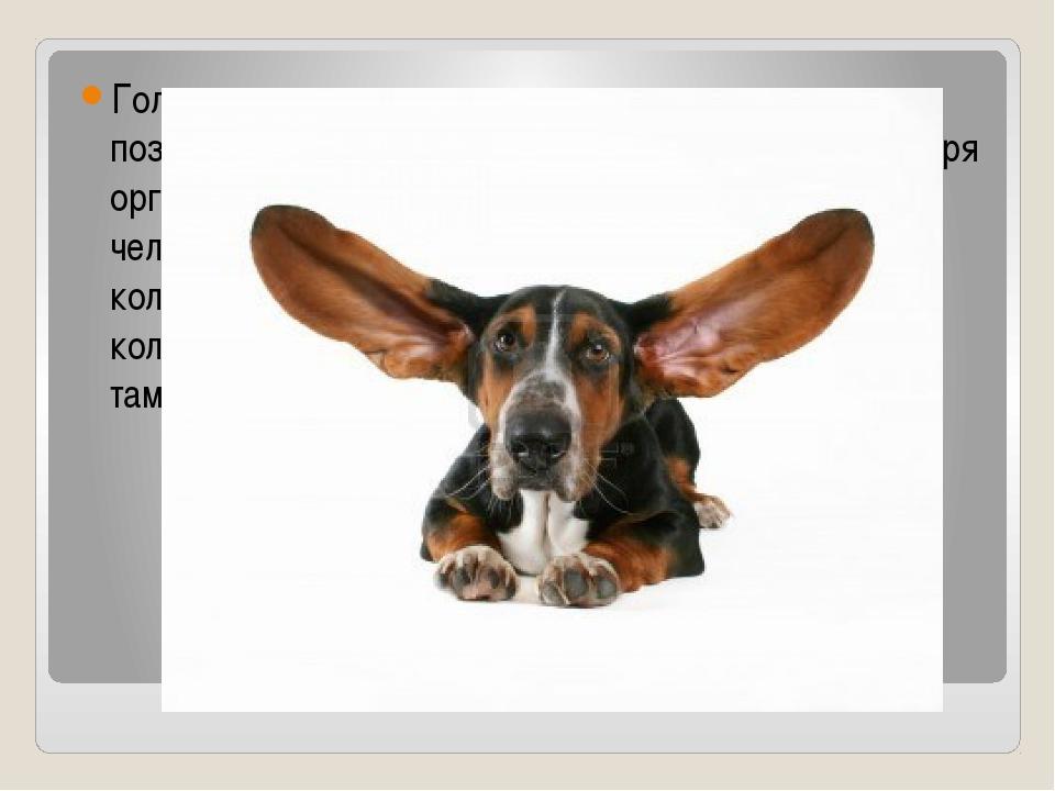 Голосовые связки вместе с проходящим воздухом позволяют нам общаться. Мы слыш...