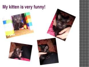 My kitten is very funny!