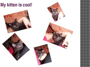 My kitten is cool!