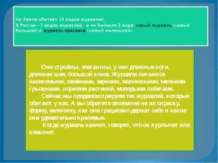. На Земле обитает 15 видов журавлей, В России - 7 видов журавлей, а на Байк