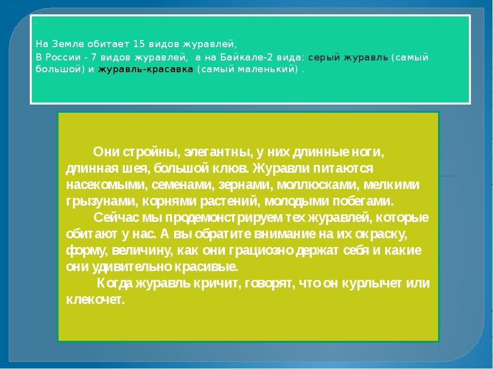. На Земле обитает 15 видов журавлей, В России - 7 видов журавлей, а на Байк...