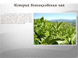 История возникновения чая Согласно китайской традиции, чай был открыт культур