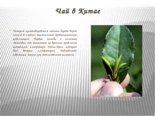 Чай в Китае История культивирования чайного дерева берет начало в глубине тыс
