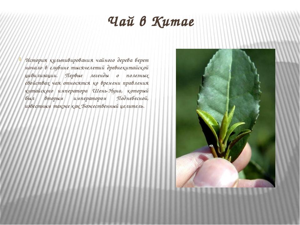 Чай в Китае История культивирования чайного дерева берет начало в глубине тыс...