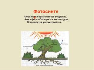 Фотосинтез Образуется органическое вещество. Атмосфера обогащается кислородо