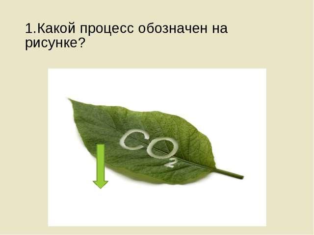 1.Какой процесс обозначен на рисунке?