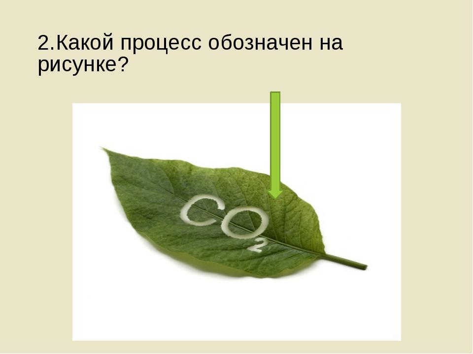2.Какой процесс обозначен на рисунке?