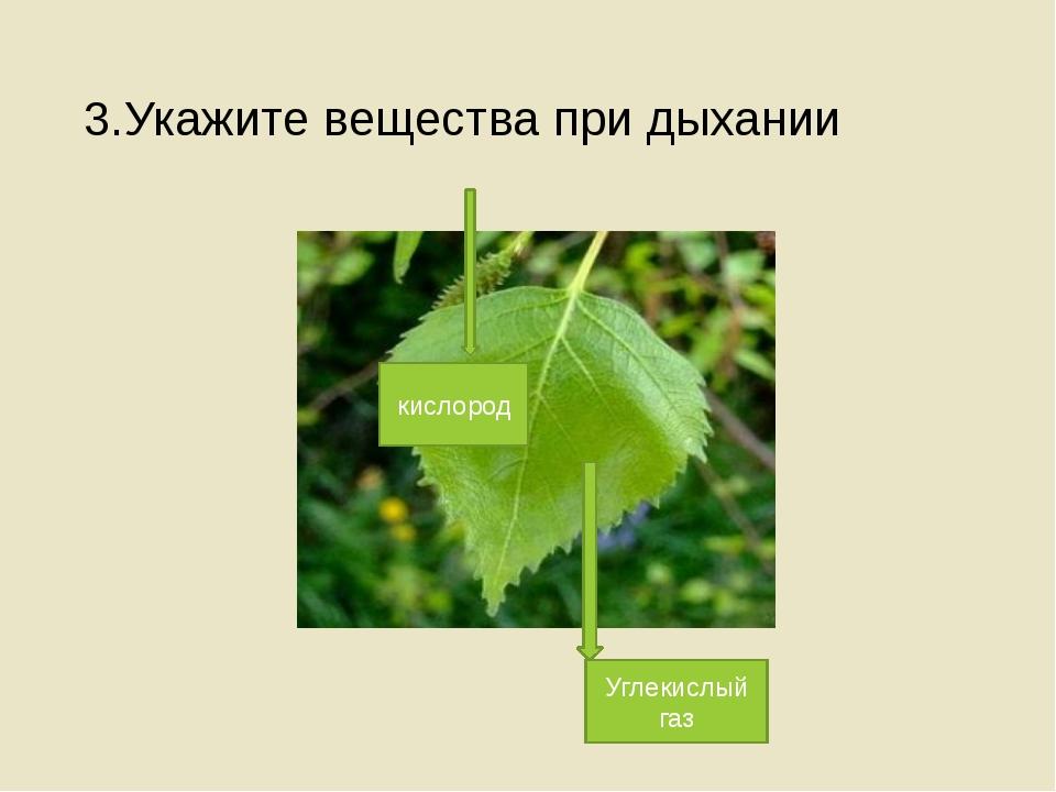 3.Укажите вещества при дыхании кислород Углекислый газ