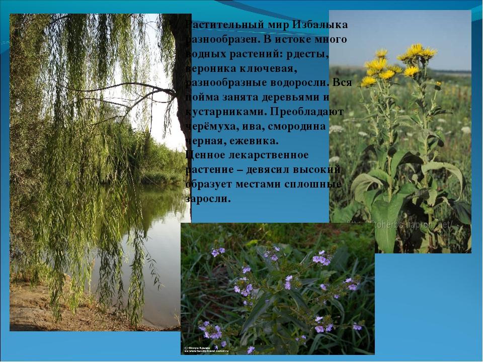 Растительный мир Избалыка разнообразен. В истоке много водных растений: рдест...