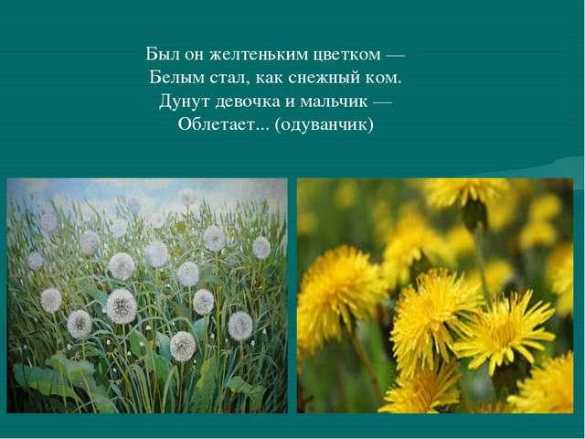 Был он желтеньким цветком — Белым стал, как снежный ком. Дунут девочка и маль...