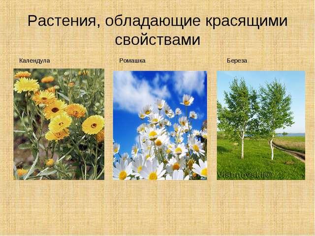 Растения, обладающие красящими свойствами Календула Ромашка Береза