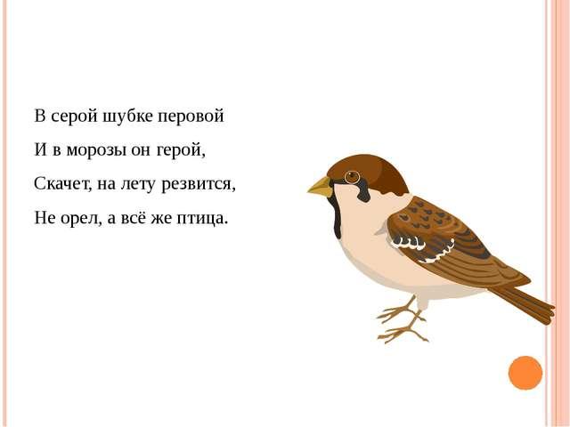 В серой шубке перовой И в морозы он герой, Скачет, на лету резвится, Не орел,...