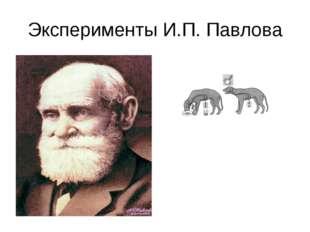 Эксперименты И.П. Павлова