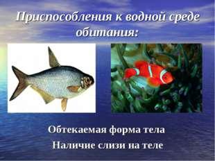 Приспособления к водной среде обитания: Обтекаемая форма тела Наличие слизи н