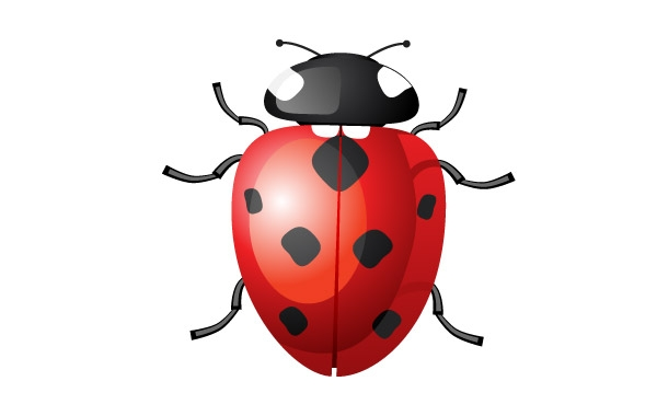 C:\Users\User\Desktop\ангелы\vector-ladybug_f.jpg