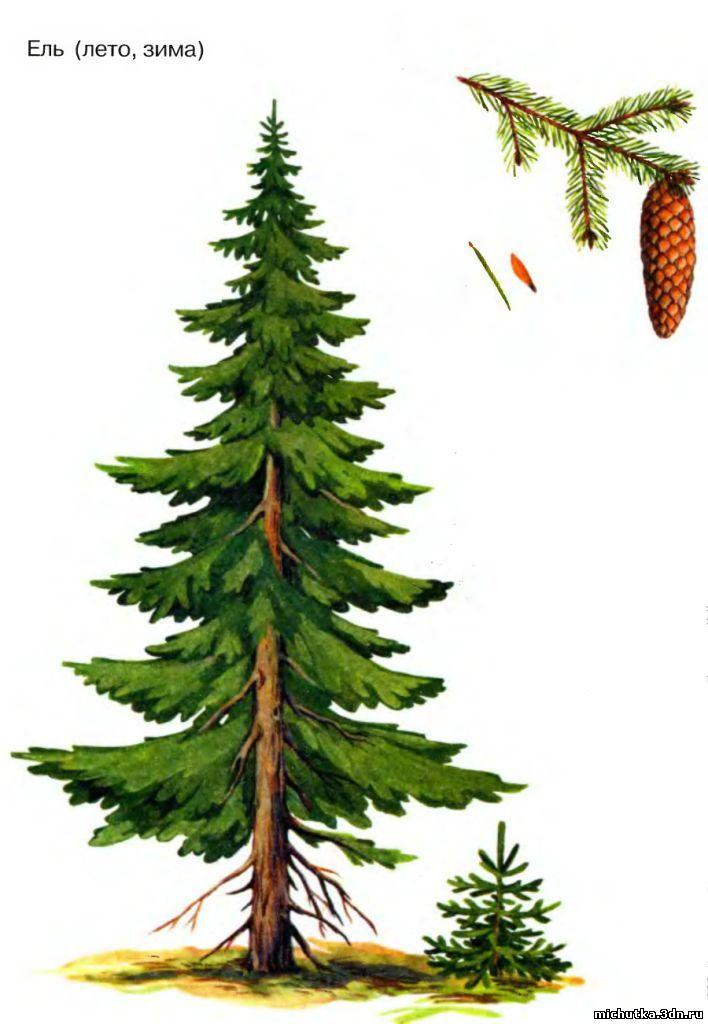 Иллюстрация 3 из 31 для Деревья в картинках. Наглядное пособие для педагогов, логопедов, воспитателей и родителей Лабиринт - кни