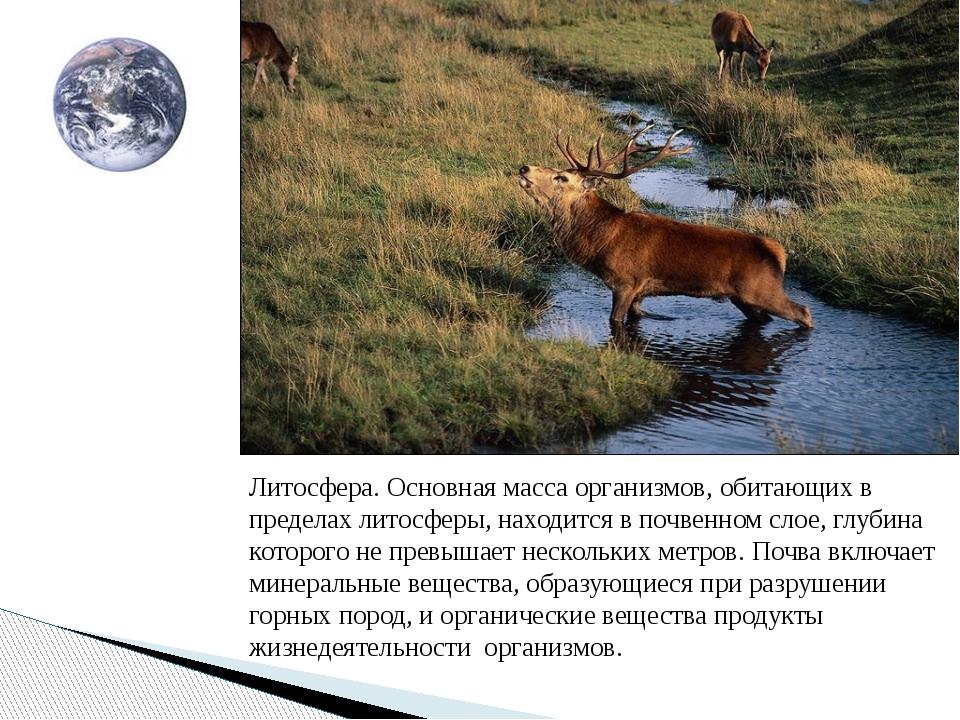 Литосфера. Основная масса организмов, обитающих в пределах литосферы, находит...