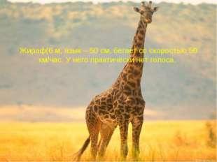 Жираф(6 м, язык – 50 см, бегает со скоростью 50 км/час. У него практически не
