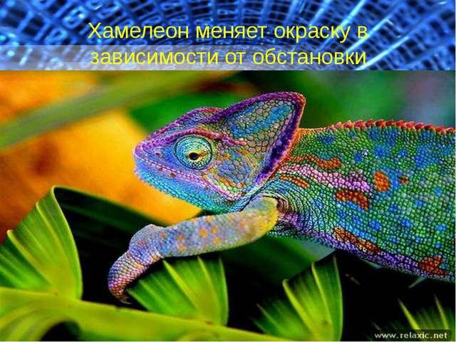 Хамелеон меняет окраску в зависимости от обстановки