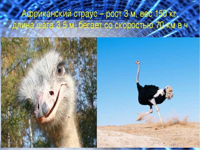 Африканский страус – рост 3 м, вес 150 кг, длина шага 3,5 м, бегает со скорос...