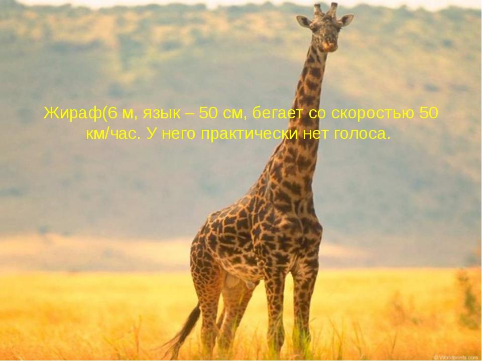 Жираф(6 м, язык – 50 см, бегает со скоростью 50 км/час. У него практически не...