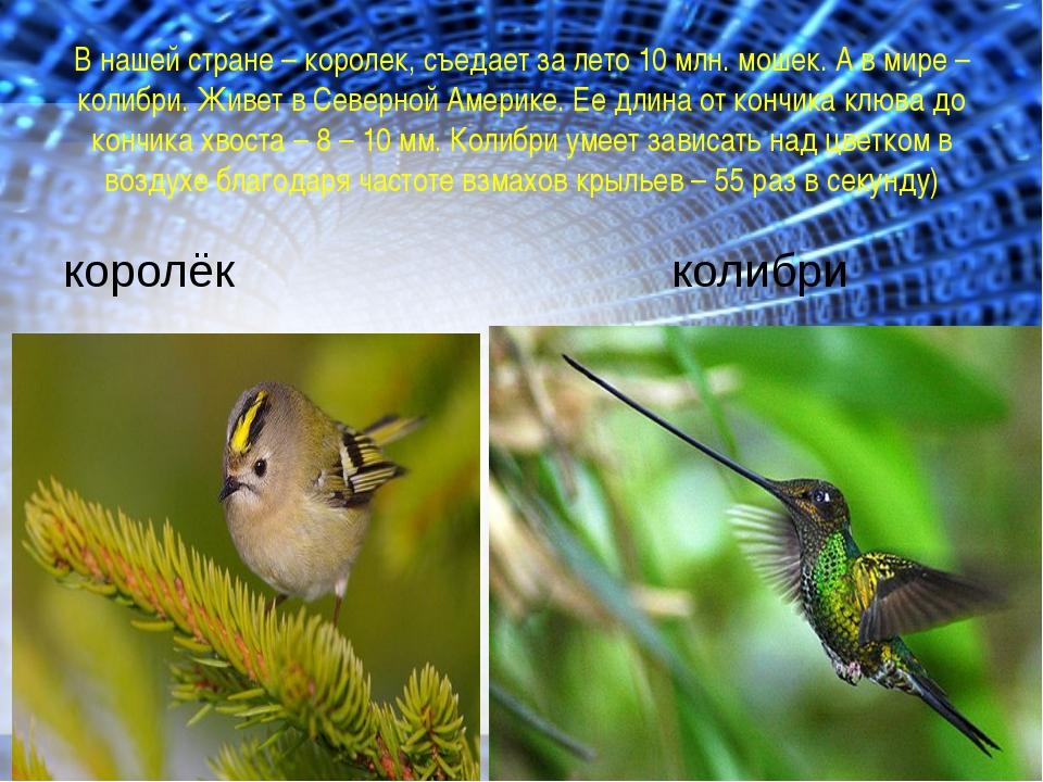 В нашей стране – королек, съедает за лето 10 млн. мошек. А в мире – колибри....