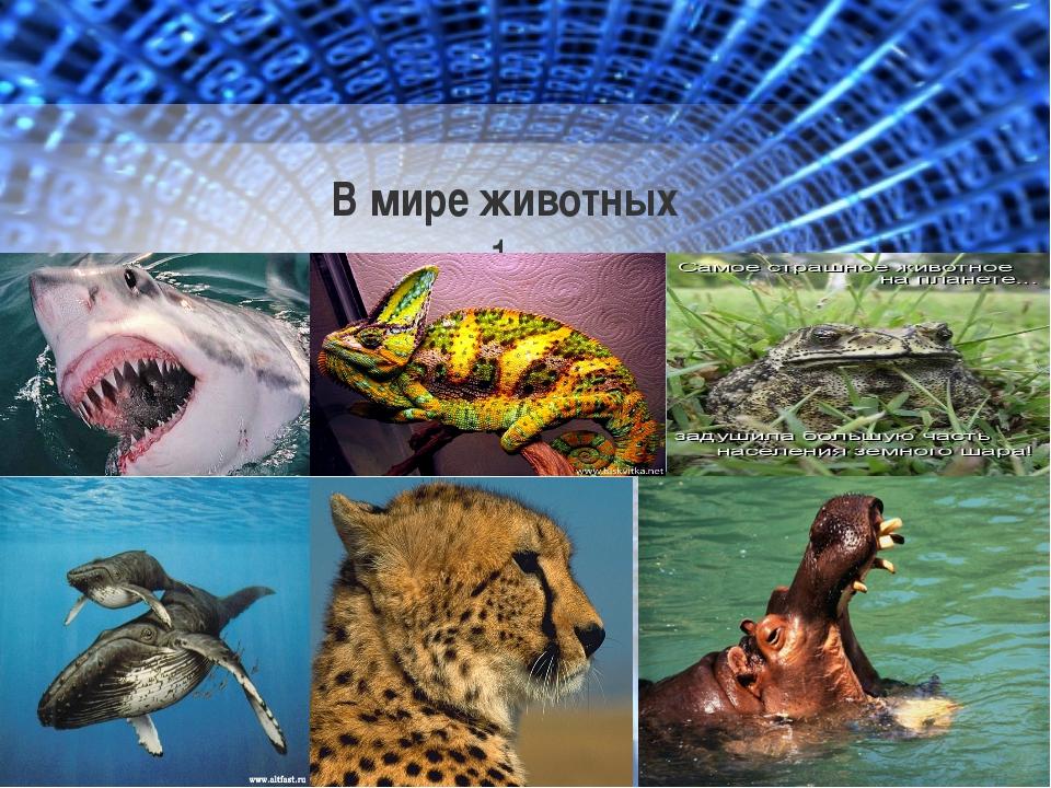 В мире животных 1.