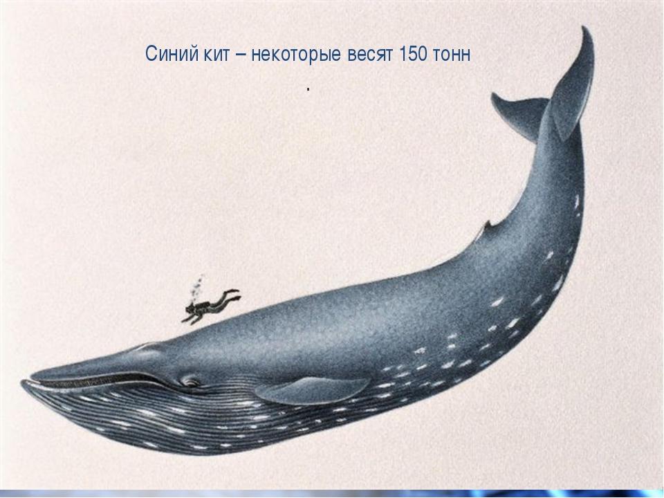Синий кит – некоторые весят 150 тонн .
