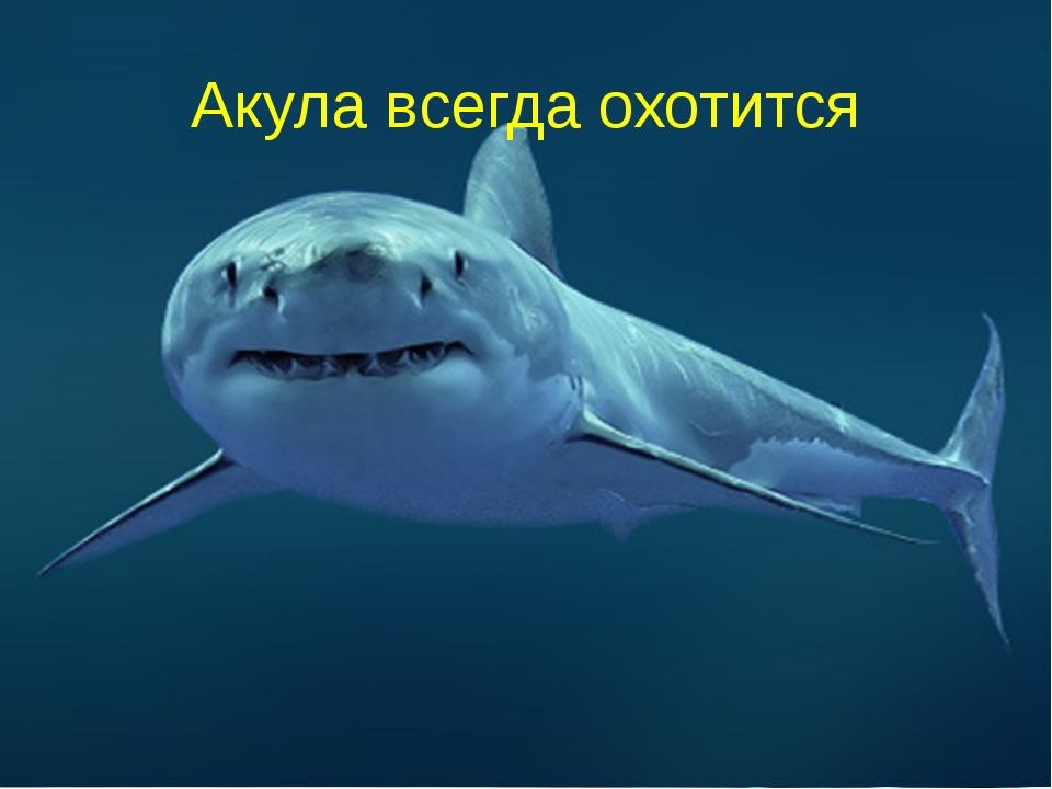 Акула всегда охотится