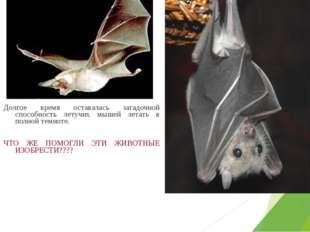 Долгое время оставалась загадочной способность летучих мышей летать в полной