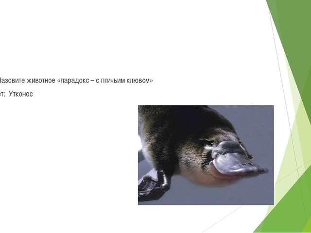 6 Назовите животное «парадокс – с птичьим клювом» Ответ: Утконос