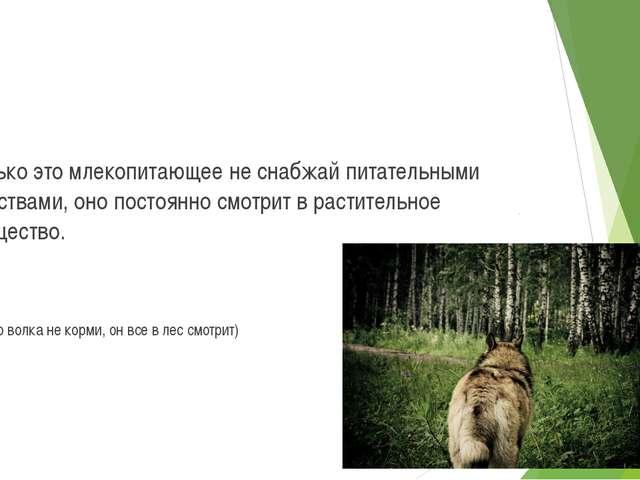 Сколько это млекопитающее не снабжай питательными веществами, оно постоянно с...