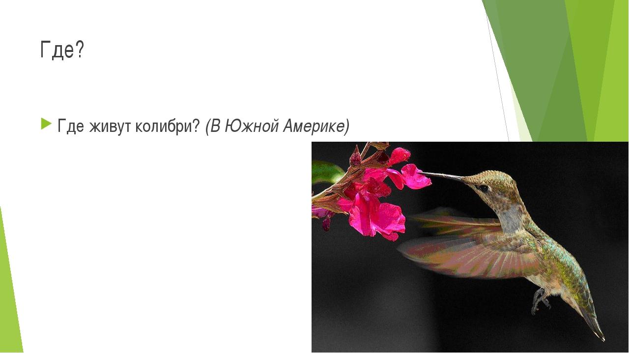 Где? Где живут колибри? (В Южной Америке)