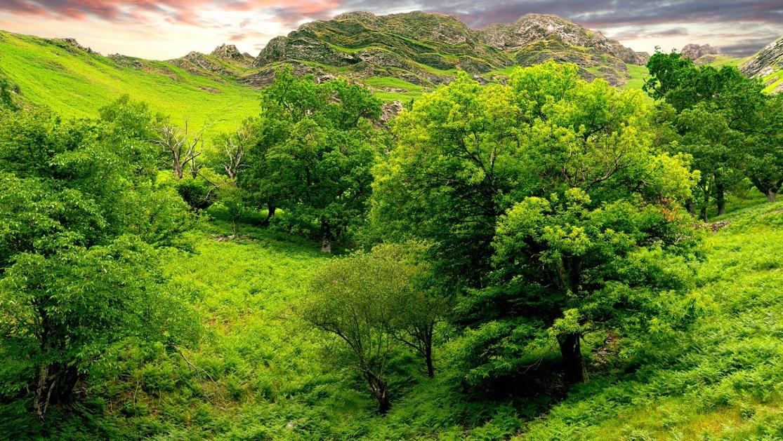 1920x1080 Обои деревья, зеленый, ярко, трава, лето, горы, рельеф, низина, ландшафт, небо