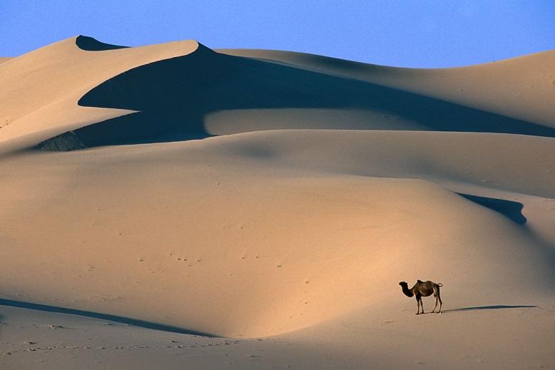 C:\Users\мария\Desktop\NW-Gobi-Camel-Mongolia.jpg