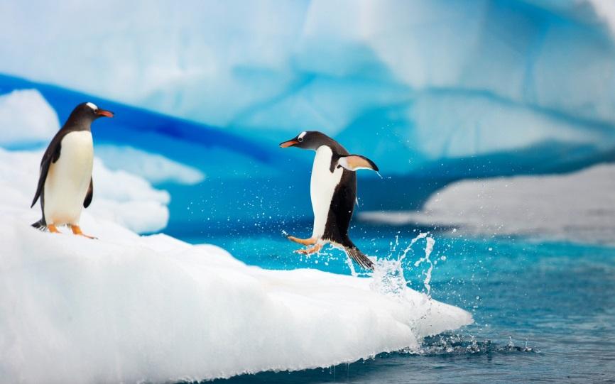 C:\Users\мария\Desktop\gentoo_penguins_antarctica-widescreen_wallpapers.jpg