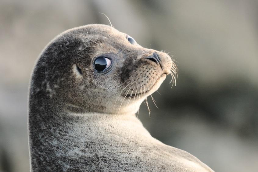 http://www.animalsglobe.ru/wp-content/uploads/2011/09/d182d18ed0bbd0b5d0bdd18c.jpg
