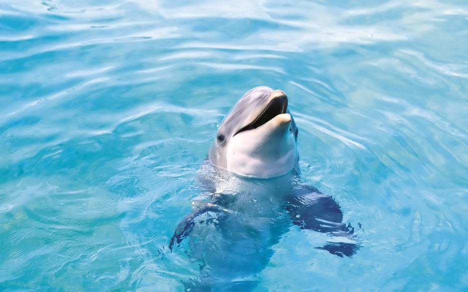 http://wallpapers111.com/wp-content/uploads/2015/01/Dolphin-HD-Wallpapers7.jpg