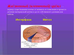Жи́зненный (клеточный) ци́кл— период существования клетки от момента ее появ