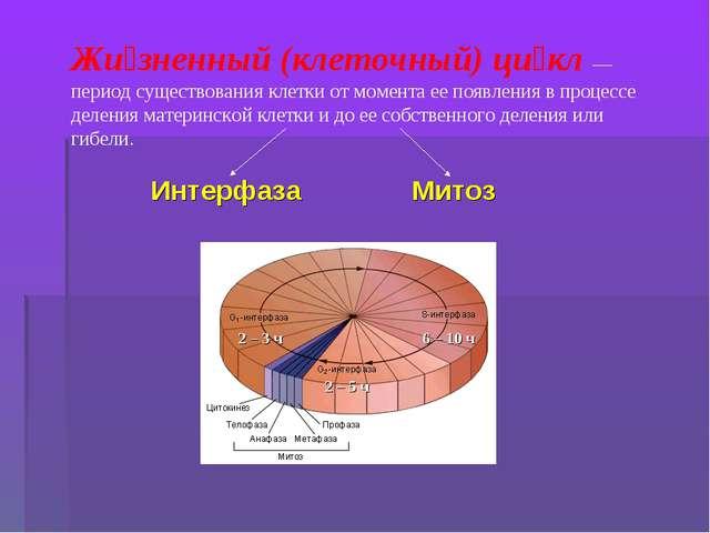 Жи́зненный (клеточный) ци́кл— период существования клетки от момента ее появ...