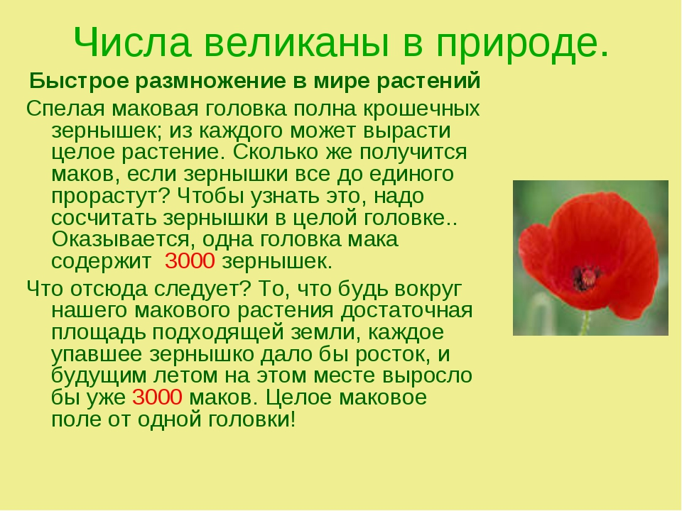 Числа великаны в природе. Быстрое размножение в мире растений Спелая маковая...