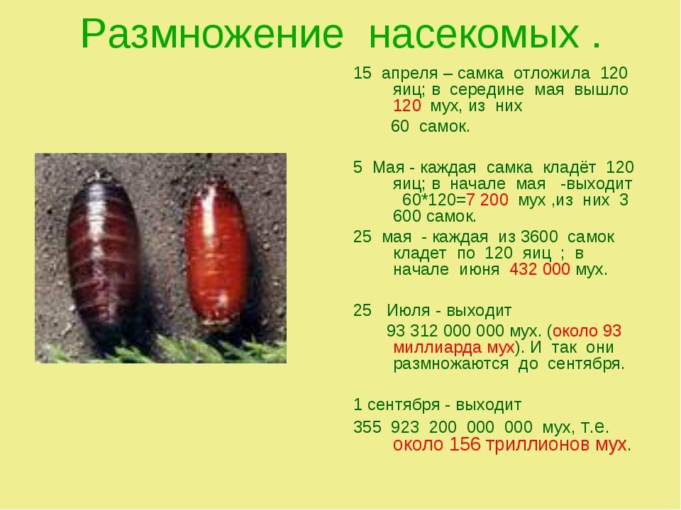 Размножение насекомых . 15 апреля – самка отложила 120 яиц; в середине мая вы...