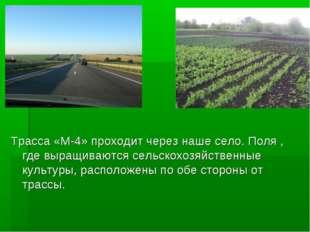 ? Трасса «М-4» проходит через наше село. Поля , где выращиваются сельскохозяй