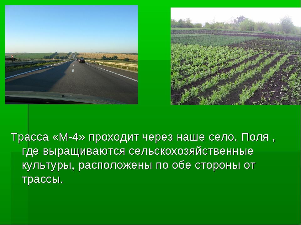 ? Трасса «М-4» проходит через наше село. Поля , где выращиваются сельскохозяй...
