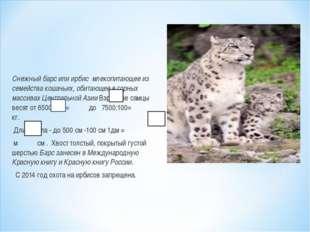 Снежный барс или ирбис млекопитающее из семейства кошачьих, обитающее в горны