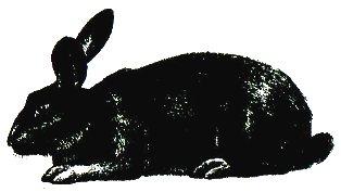 Кролик Черно-бурый