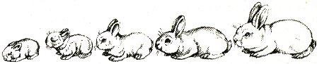Рост и развитие крольчонка породы белый великан от 1 до 30 дней