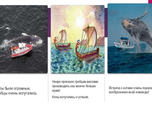 Киты были огромные, гребцы очень испугались Неарх приказал гребцам веслами пр...