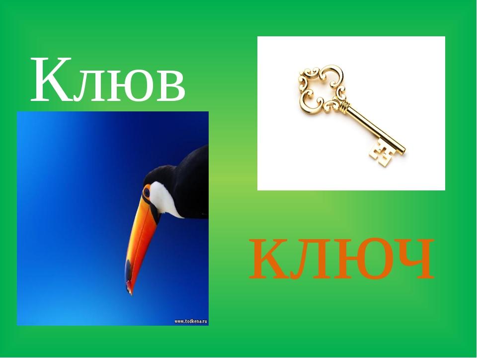 Клюв ключ