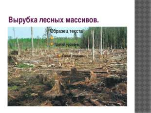 Вырубка лесных массивов.